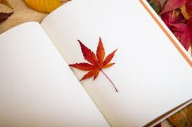 Leaf in book